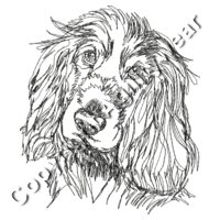 English Cocker Spaniel 1 back