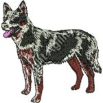 Aust Cattle dog Thumbnail