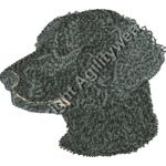 Black Curly Coated Retriever Thumbnail