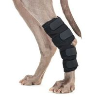 Back on Track® Canine Hock/Ankle Wraps Thumbnail