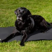 Back on Track® Canine Mattress, Cage Fit Thumbnail