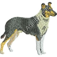 Smooth Coat Collie48885 Thumbnail