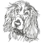 English Cocker Spaniel 1 back Thumbnail